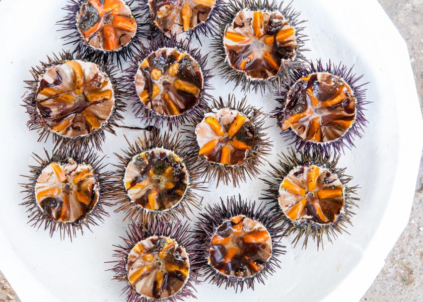 Sea urchins and mussels, BEEF! Magazine