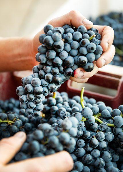 Winery Fournier