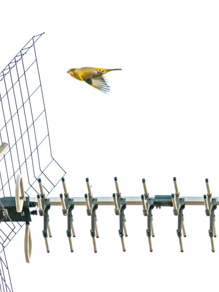 Bird#01, 2020