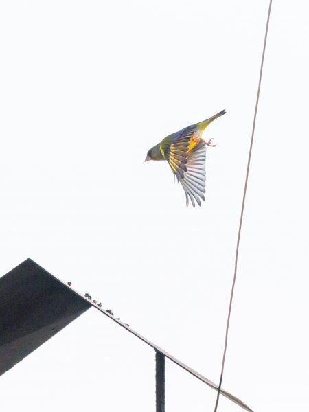 Bird#08, 2020