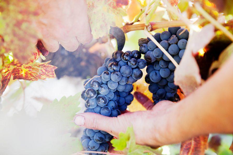 Winemaker Cillar de Silos, Ribera del Duero.