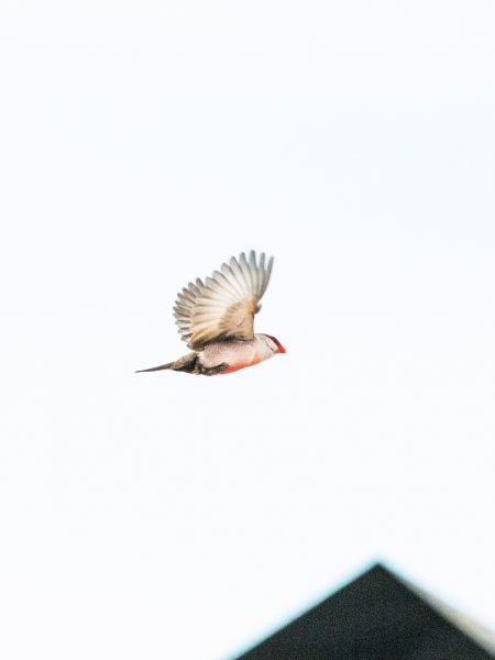 Bird#05, 2020