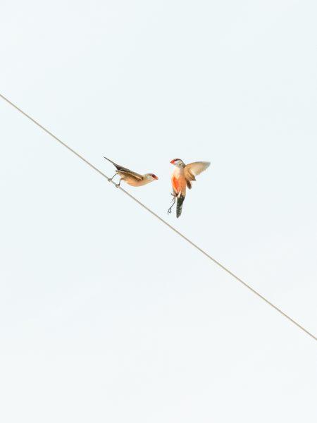 Bird#02, 2020