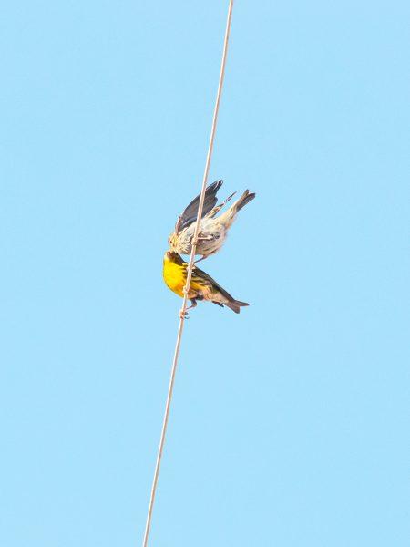 Bird#07, 2020