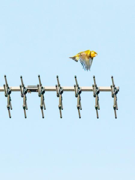 Bird#14, 2020