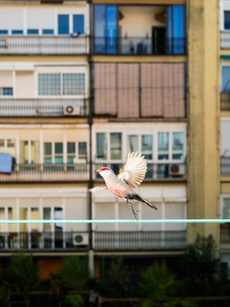 Bird#13, 2020
